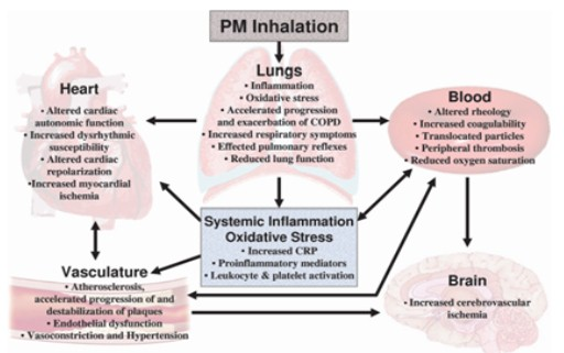 PM Inhalation
