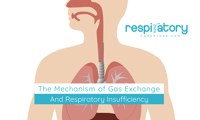 The Mechanism of Gas Exchange and Respiratory Insufficiency